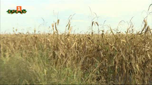 Едно успяло земеделско стопанство в Унгария