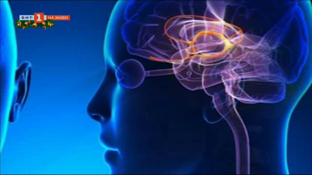 Защо преяждаме и как влияе храната върху мозъка