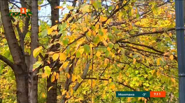 Окапалите листа като енергиен ресурс
