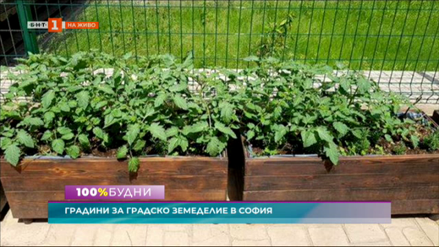 Инициатива за градско земеделие