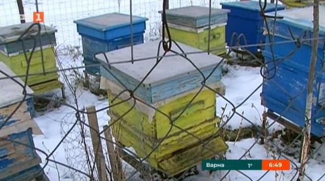 Изчезват ли българските пчели?