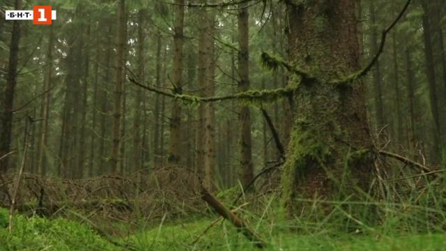 Енергия от дървесинни остатъци