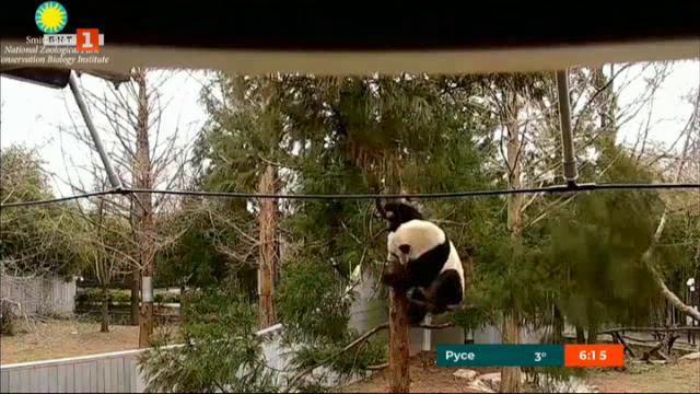 Националният зоопарк в САЩ отново заработи