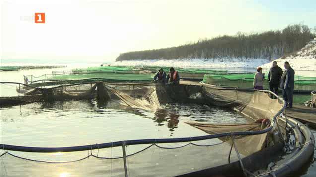 Какво не знаем за фермите за производство на риба