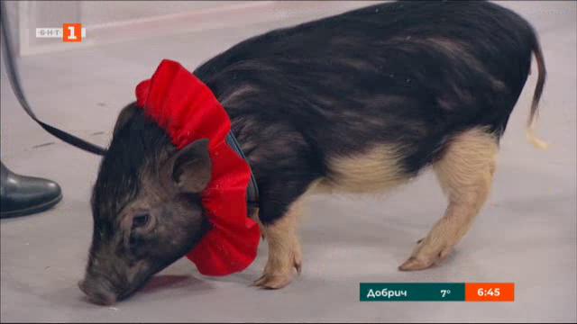 Годината на прасето