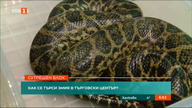 Заловиха змията беглец от магазин в Пловдив