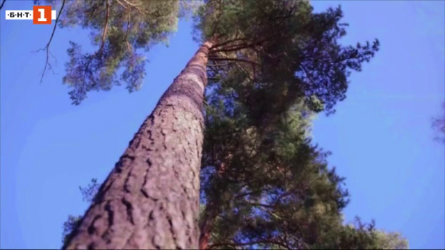 Супер дърво