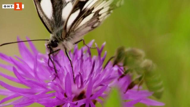 Защо изчезват насекомите?
