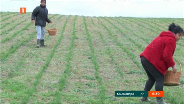 България ще произвежда шафранови луковици за Китай
