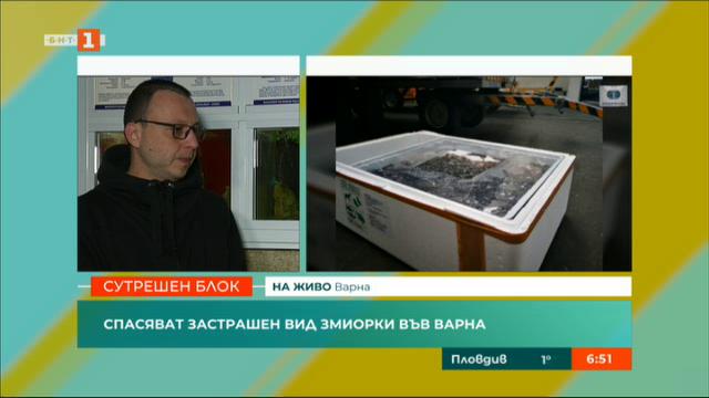 Спасяват защитен вид змиорки във Варна
