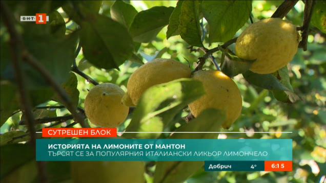 Историята на лимоните от Мантон