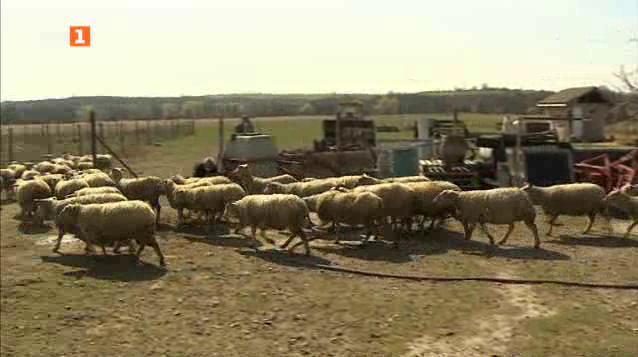 Френски породи отглеждани в български ферми