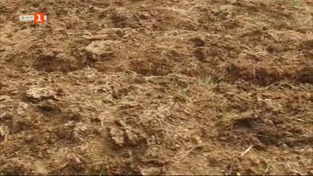 Тайната на успеха в една ферма за калифорнийски червеи