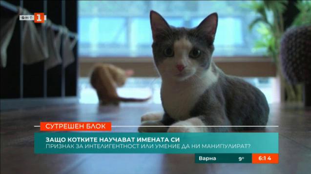 Защо котките реагират на името си