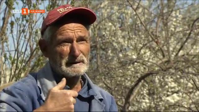 Бай Данчо от с. Ресилово - един философ в овощната му градина