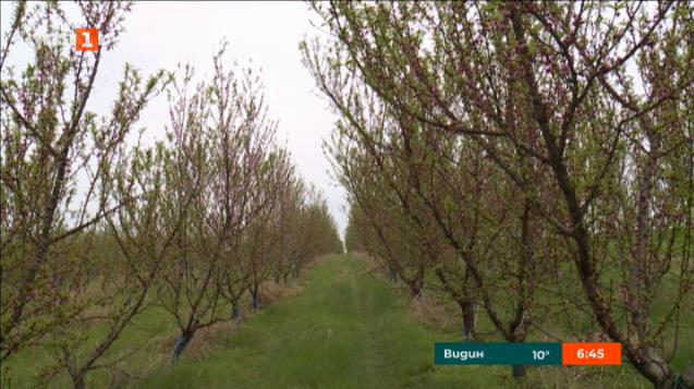 Хиляди декари с овошки са измръзнали в Североизточна България