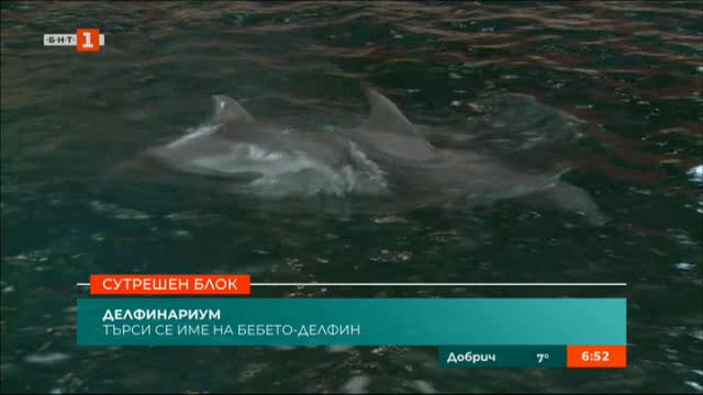 Търси се име за бебе делфин