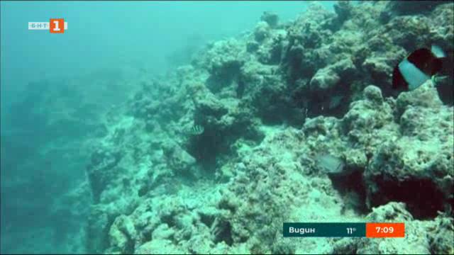 Спасяването на коралите