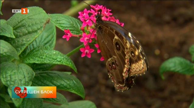 Какво се случва с пеперудите на Острова