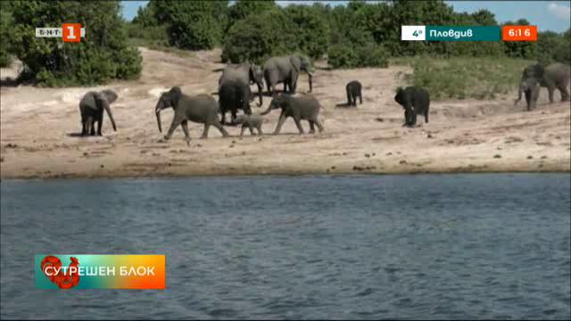 Ботсвана може да разреши отново лова на слонове