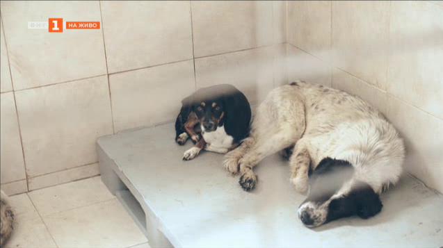 Кампания на фондация Четири лапи за осиновяване на бездомни животни