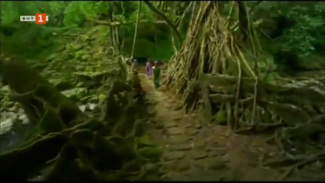 Живите мостове на Черапунджи