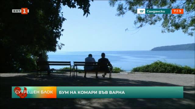 Бум на комари във Варна