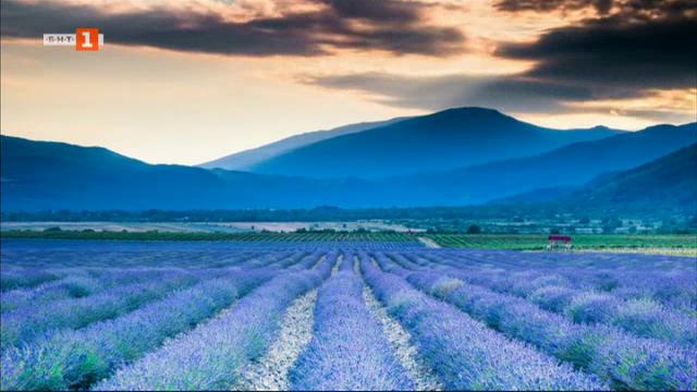 Лавандуловите полета на България – европейски бизнес с бъдеще