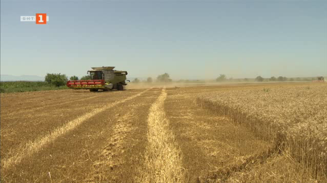 Започна жътвата на пшеница