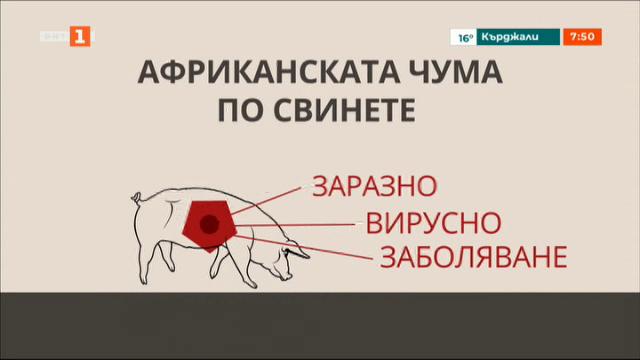 Строги мерки срещу чумата по свинете