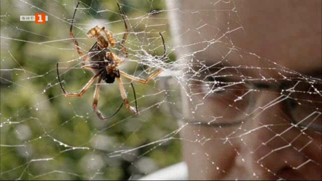 Как влакно от паяжина може да спре самолет