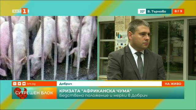 Бедствено положение в Добрич заради чумата по свинете
