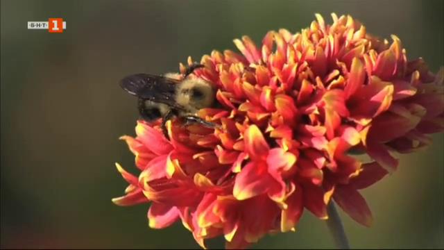 В софийското село Равно поле едно момиче превръща пчеларството в своя професия