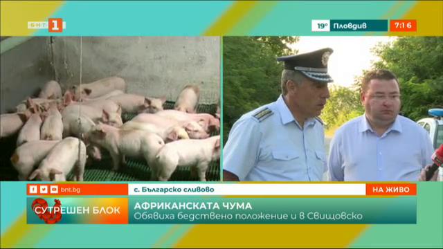 Бедствено положение в Българско Сливово заради чумата по свинете