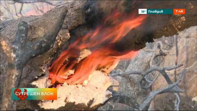 Как ЕС помогна на Гърция с пожарите?