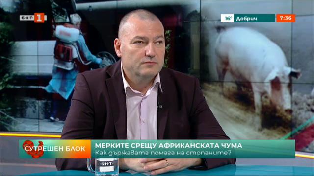 Мерките срещу африканската чума - разговор с д-р Георги Чобанов