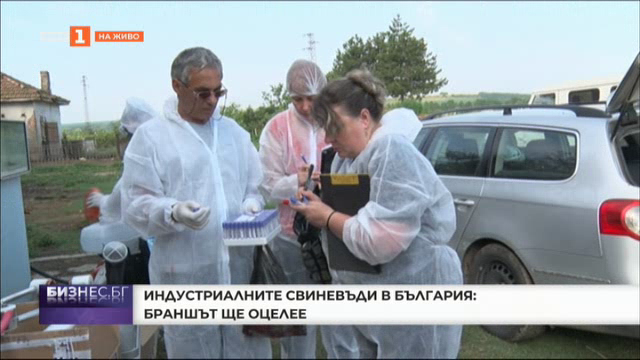 Индустриалните свиневъди в България: Браншът ще оцелее