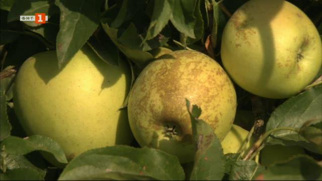 Защо не намираме вкусните български ябълки по магазините?