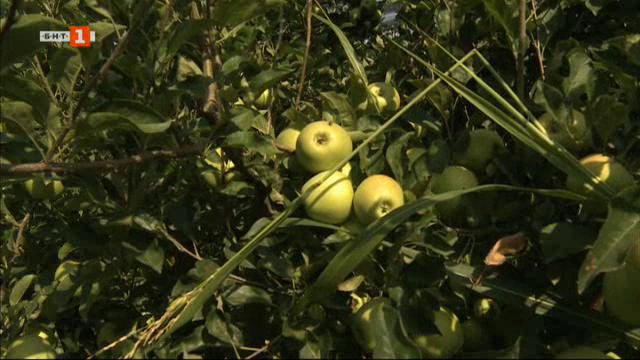 Защо изчезват българските ябълки и зеленчуци от магазините?