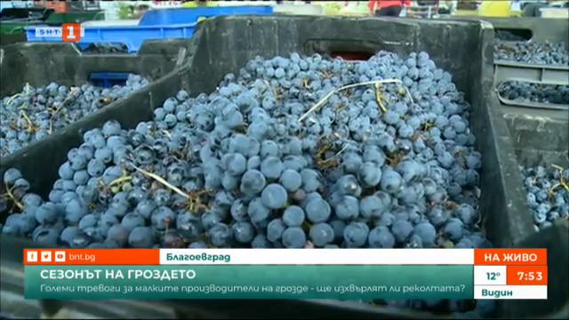 На пазар в Благоевград: Търсенето на грозде е голямо, а качеството - много добро