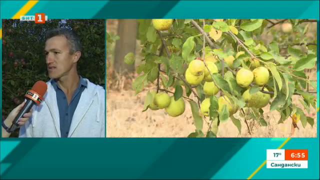 Дунавските овощари са недоволни от ниските изкупни цени и евтин внос на плодове