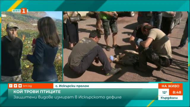 Откриха мъртви лешояди във Врачанския Балкан - птиците са били отровени