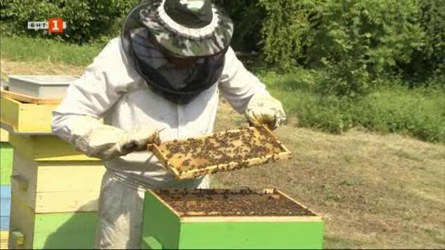 Био пчелини в Разградско