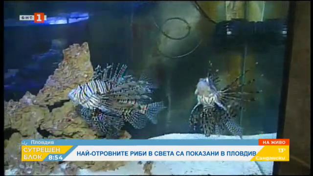 Най-отровните риби в света могат да се видят в Природонаучния музей в Пловдив
