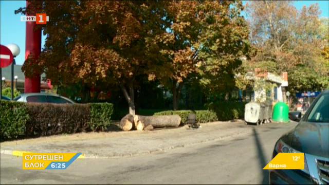 Глобиха собственик на заведение в Пловдив заради отрязано дърво