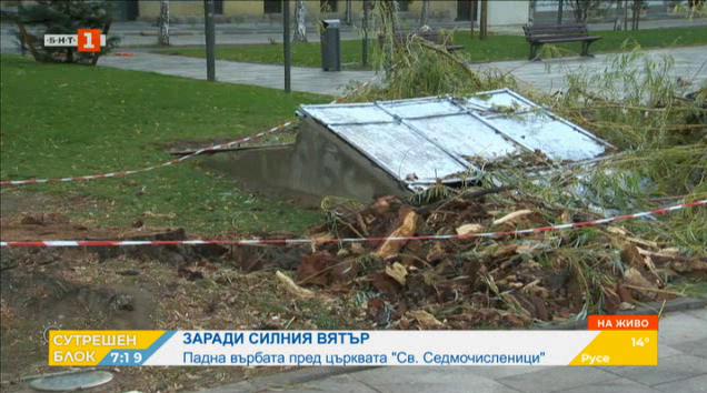 """Силният вятър събори една от върбите пред църквата """"Св. Седмочисленици"""""""