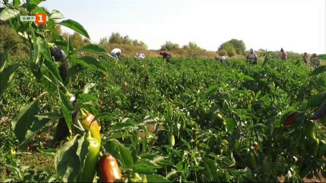 Борбата на фермерите за българските зеленчуци