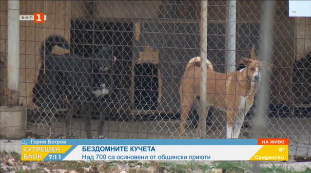 Над 700 кучета от общинските приюти в София са осиновени