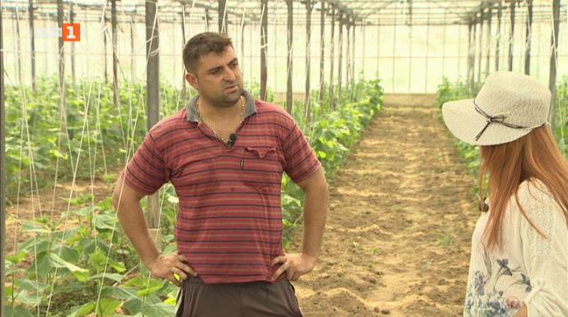 Какви проблеми имат производителите на парникови зеленчуци