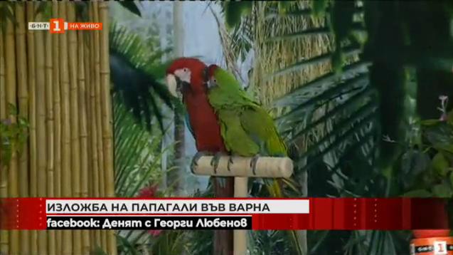 Изложба на папагали във Варна
